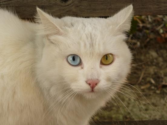 Знаменитости с гетерохромией - глазами разного цвета