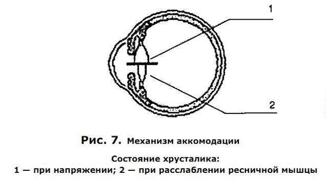 Аккомодация глаза - что это, описание механизма