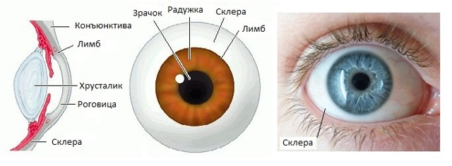 Как называется белая часть глаза